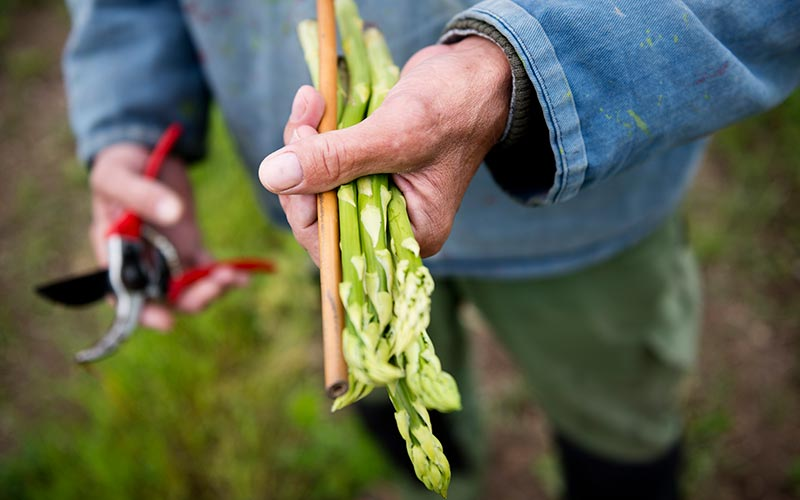 When is British asparagus season?