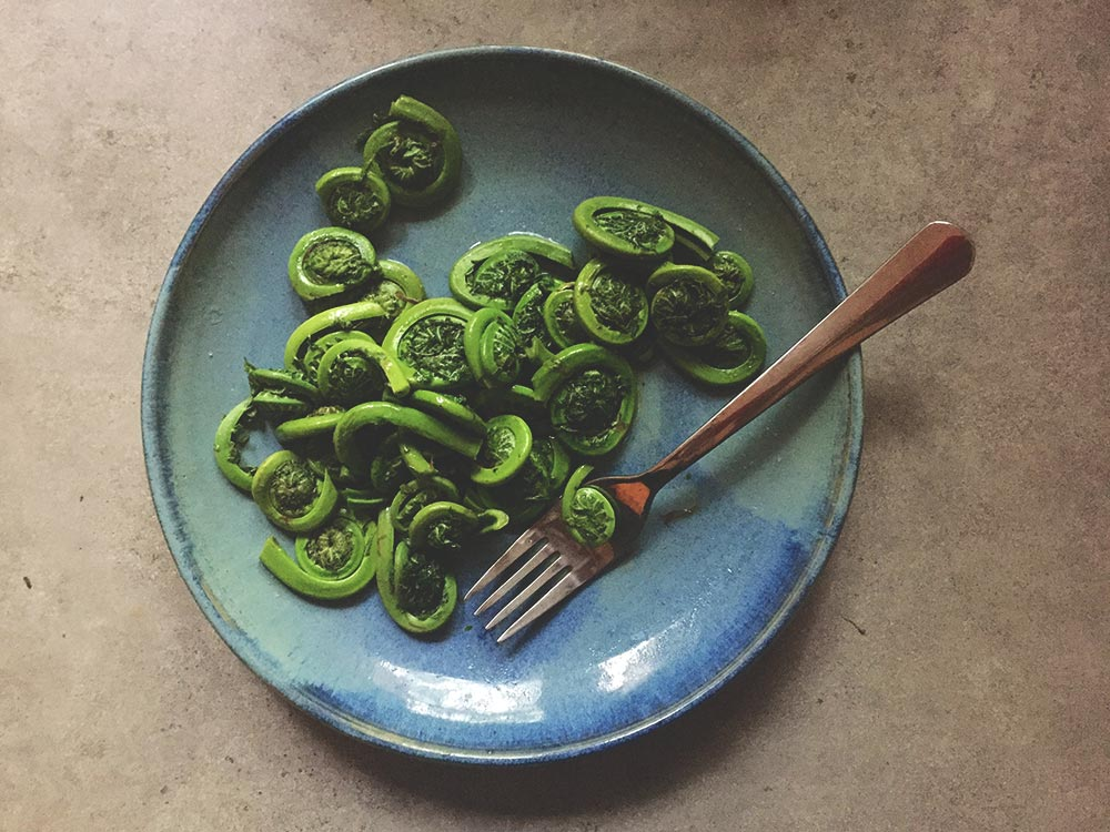 Fiddlehead ferns served on a plate