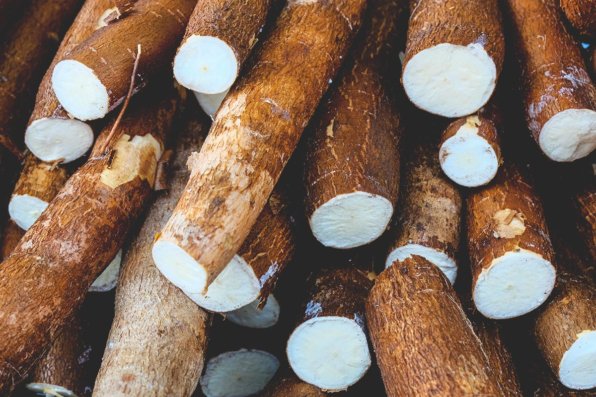chef's guide to cassava