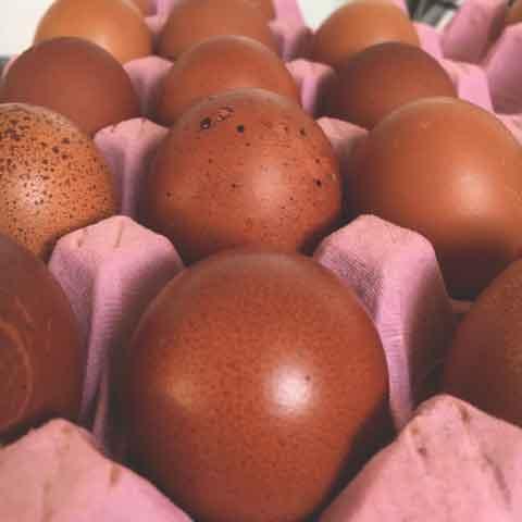 Maran hen eggs