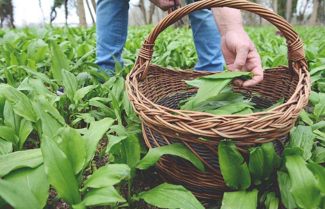 Chef's Guide to Wild Garlic | Wild Garlic Season | First Choice